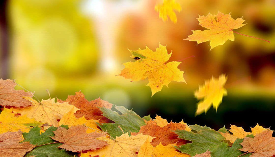 Pourquoi les arbres perdent-ils leurs feuilles